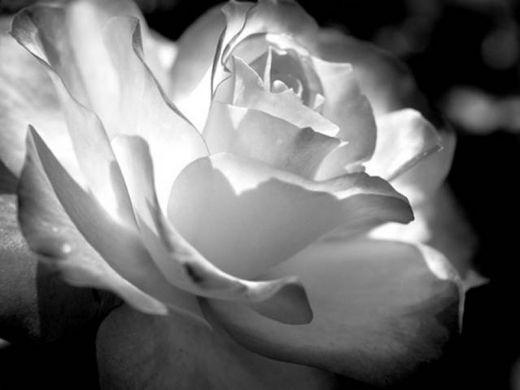 Image Du Puzzle Rose Noir