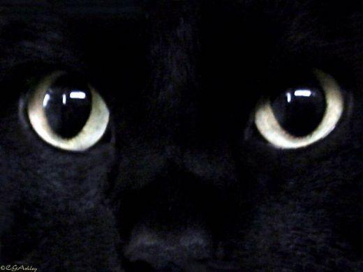 puzzle chat noir aux yeux noirs jeu de jeu de puzzle gratuit en ligne vos. Black Bedroom Furniture Sets. Home Design Ideas
