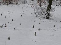Pourtalès - Horde de nains