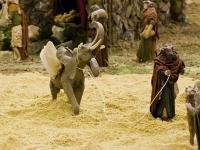 Homme à l'éléphant