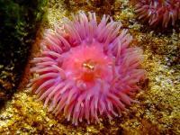 Polype de corail