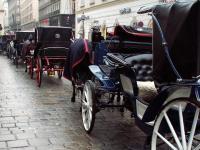 Vienne St Stefan calèches