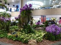Orchidées géantes