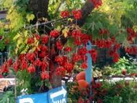 Guinguette en Crète