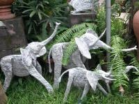 Jardin à Kinshasa