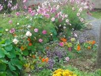 Jardin cosmos capucines