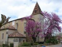 Eglise de Fourcès et son arbre