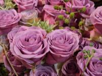 Roses Doué-la-Fontaine