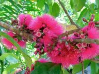 Jolie fleur du Congo