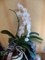 Mon orchidée (2)