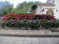 Lamagistère, fleurs