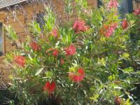 Plante fleurie du sud