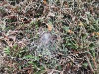 Givre toile araignée