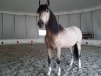 Adorable cheval