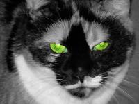 Chiffon aux yeux verts